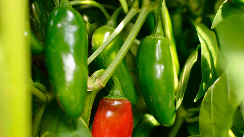 Gemüse & Spezialitäten im Kisterl 2.0