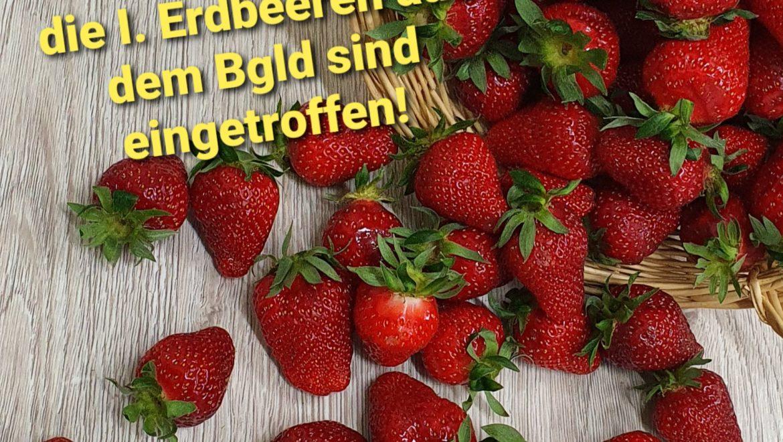 Erdbeeren aus dem Bgld